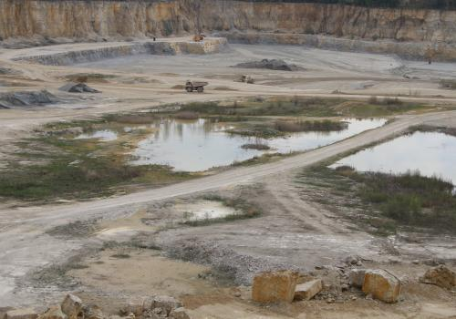 temporary habitats in active quarry in germany