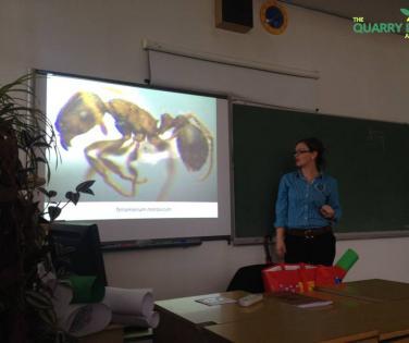Biodiversity of quarry Ribnica, Ants as Bioindicators